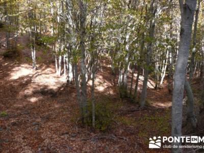 Excursiones organizadas desde Madrid, Parque Natural del Hayedo de Tejera Negra; federacion de monta